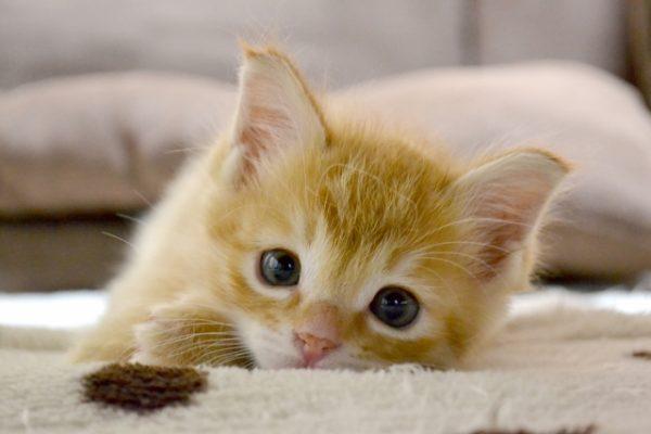 おひとり様、ペットを残して死ぬ前に考えておきたい終活